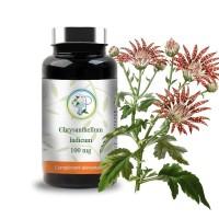 Chrysanthellum indicum planticinal - Planticinal