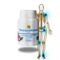 HARPAGOPHYTUM - Intestin et muscules - Nature et Partage