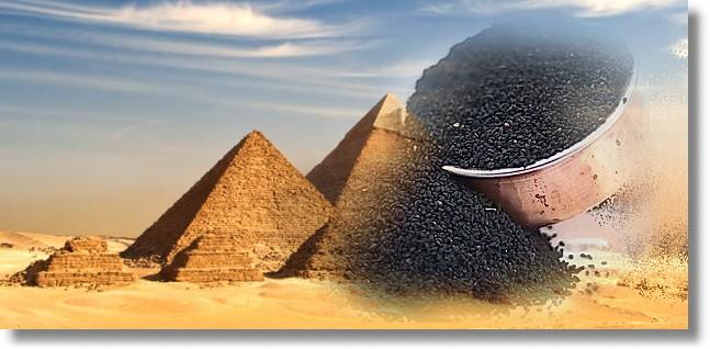 nigelle cumin noir d'Egypte