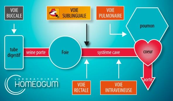 homeogum chemin sublingual
