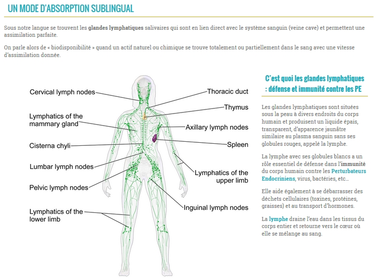 absorption sublinguale