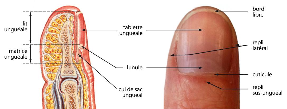mycose vulvovaginale