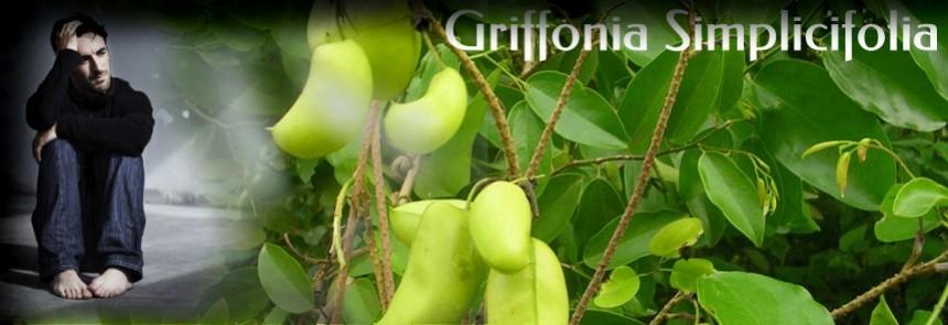 Bienfaits Griffonia Simplicifolia - dépression | Fondation des maladies du cœur et de l'AVC